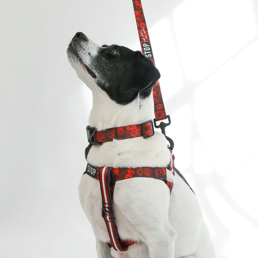 STOP Le Sport Dog Harness