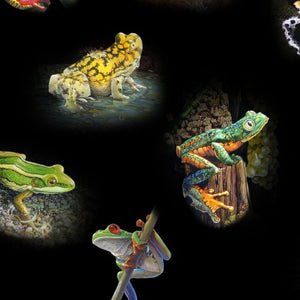 Amazing Frogs