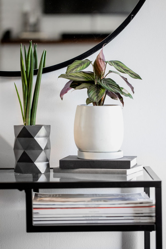 No.33| Tulip Planter with Drip Tray