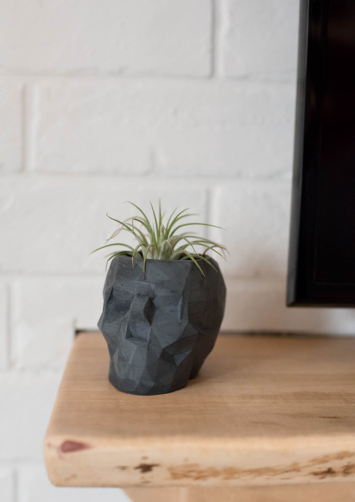 No.31| Geometric Skull Planter