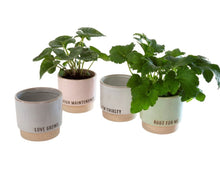 Load image into Gallery viewer, Root For Me Planter Pot 3-9379
