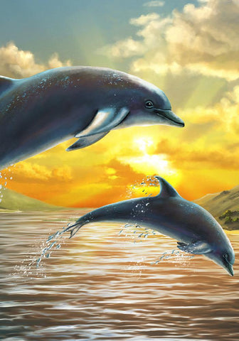 Dolphins in the Sun