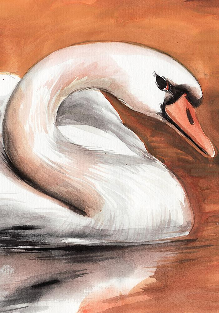 White Swan in the Sunset