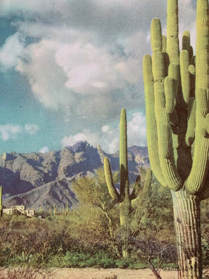 THE CATALINAS NEAR TUCSON
