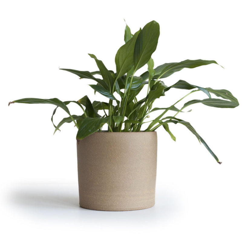 'Oat' Medium Planter