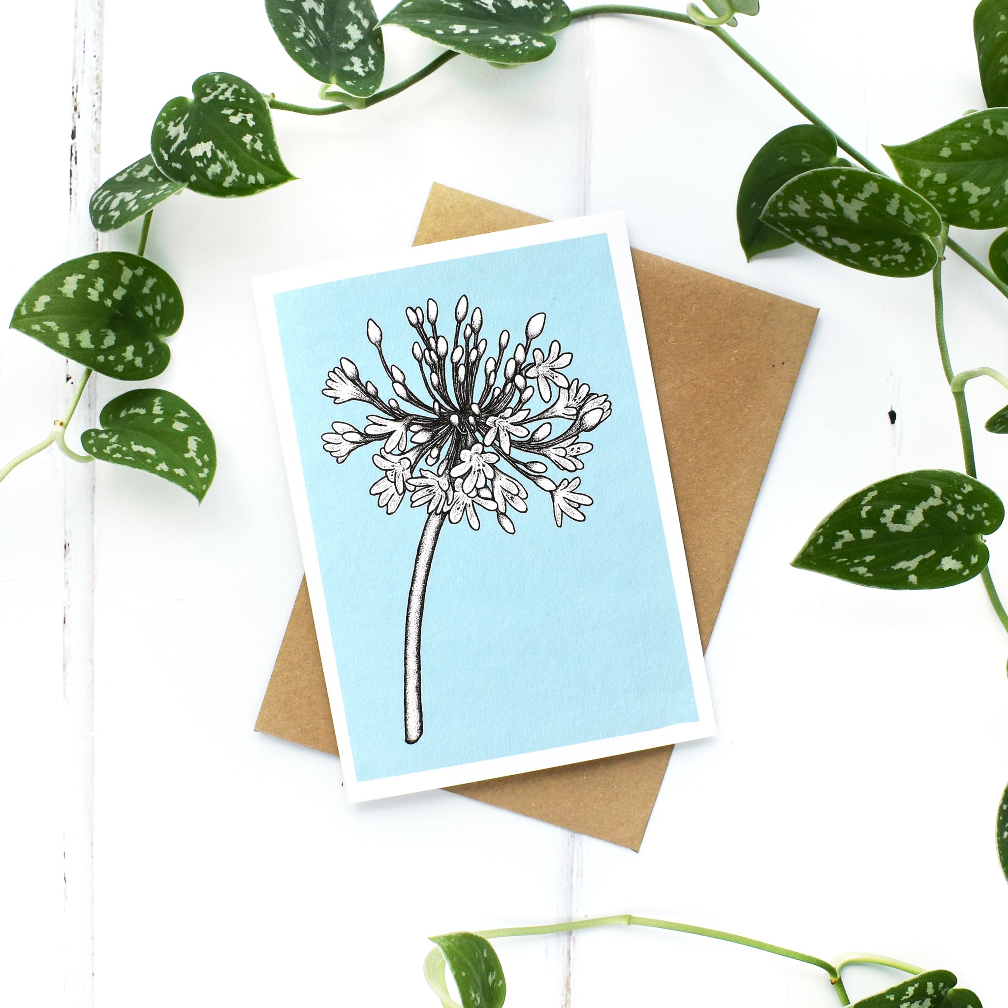 Agapanthus A6 Greeting Card, Blank Inside