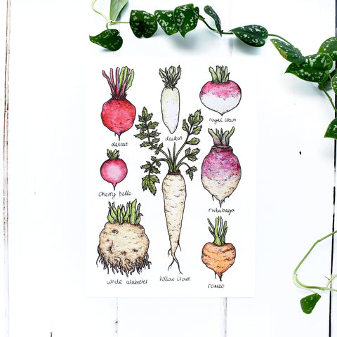 Root Vegetables A4 Print