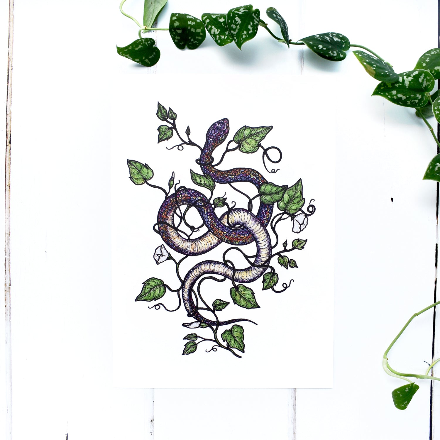 Rainbow Snake and Botanical A4 Print