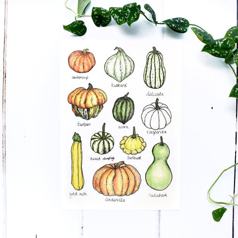 Summer Squashes and Gourds A4 Print