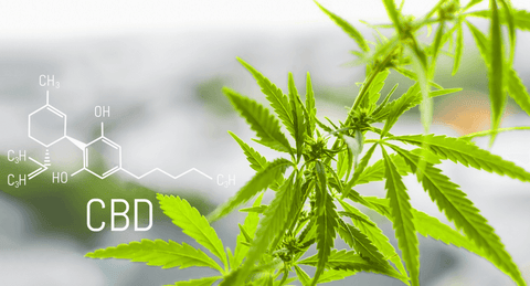 CBD Isolate for the health