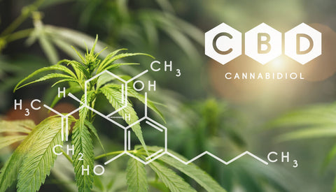 cbd oil best