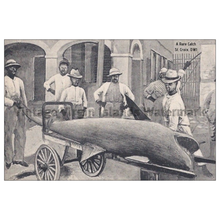 Load image into Gallery viewer, A Rare Shark Catch ~ St. Croix Postcard - Vintage Virgin Islands