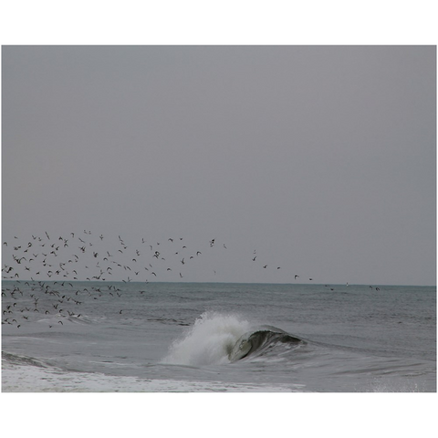 flock of birds swooping in and out of ocean wave