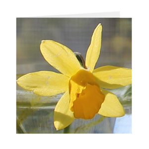 Open image in slideshow, DAFFODIL