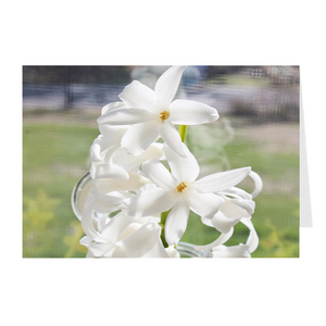 Open image in slideshow, HYACINTH