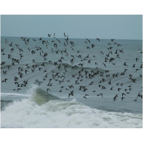 flock of black and white birds flying above ocean
