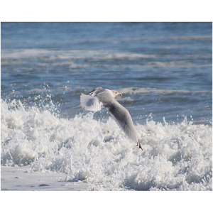 Open image in slideshow, seagull flying above ocean waves blue and white