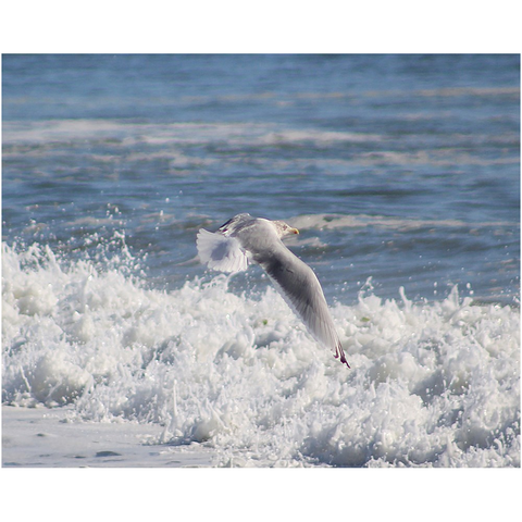 seagull flying above ocean waves blue and white