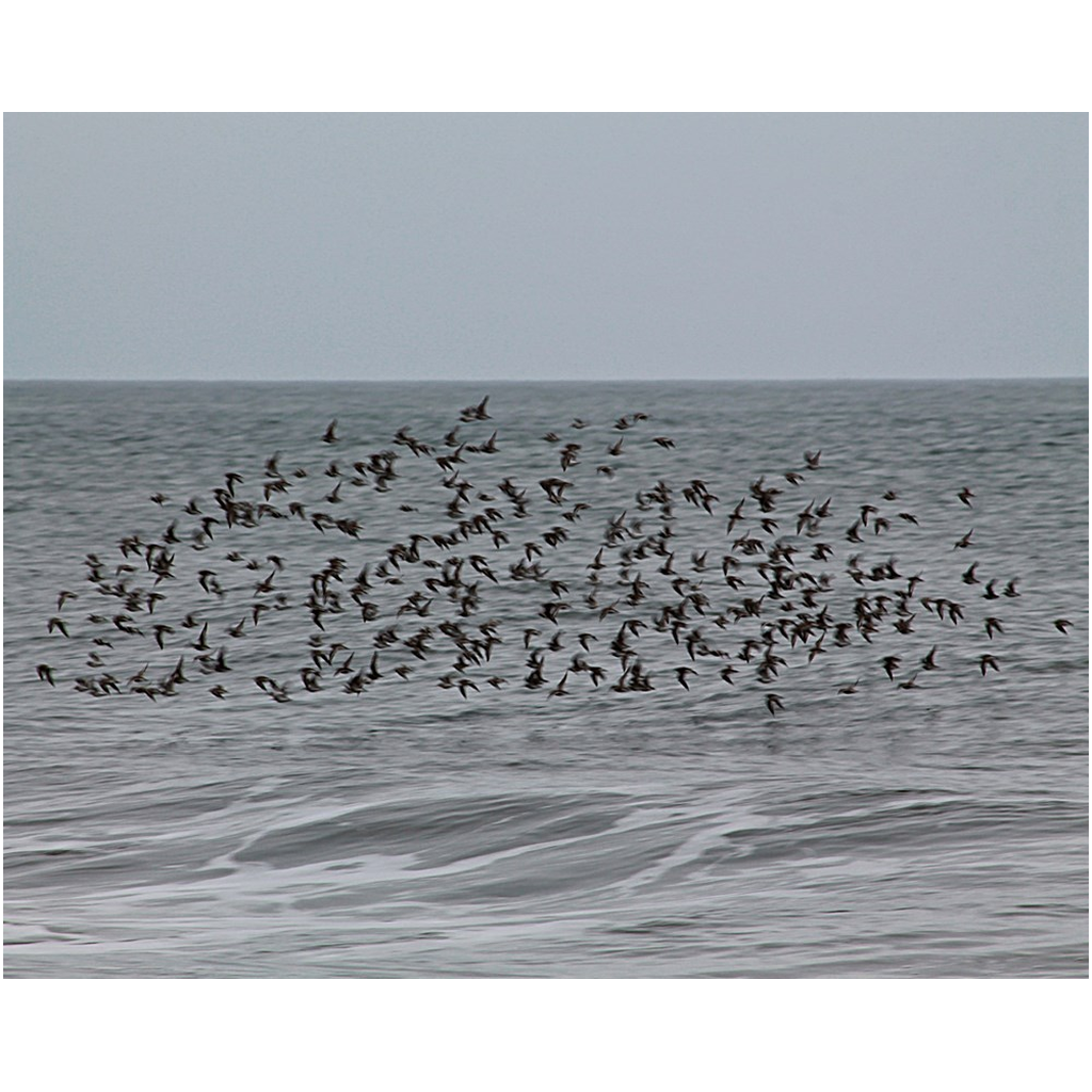 birds flying above ocean waves