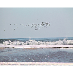 flock of birds flying ocean waves