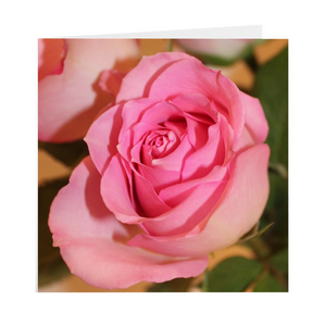 Open image in slideshow, PINK ROSE