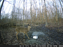 Load image into Gallery viewer, HP Trail Camera