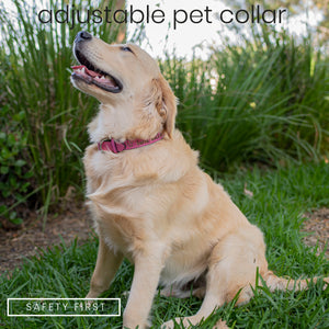 Pet Collars  Design 6