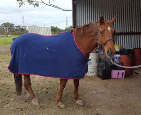 Polar Fleece Rug under 4'9