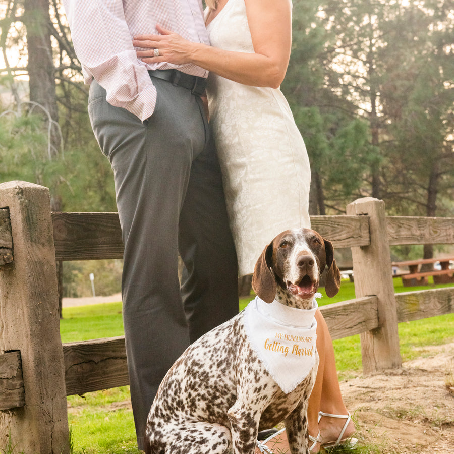 My Humans Are Getting Married! (White/Gold)