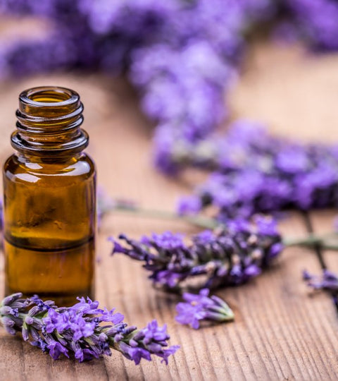 Lavender Essential Oil- Health Benefits, Side-effects, and Dosage