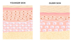Young and old skin layers comparison