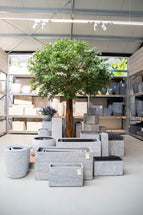 Artificial Ficus Tree L150W210H300