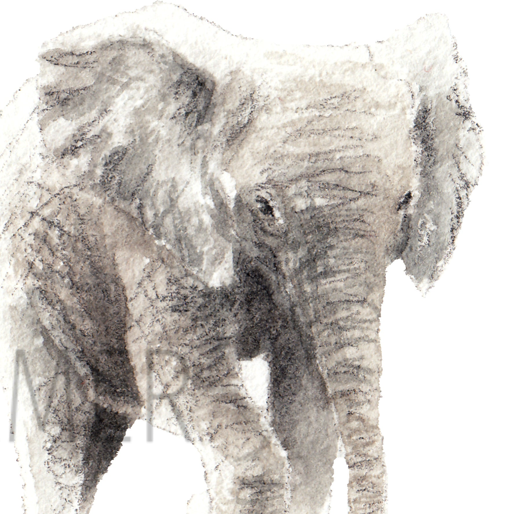 Elephant Collection - Carina Kramer - Fine Art, Theme Collection, Wildlife Art/ Animal Painting