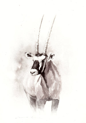 Gemsbok - Sketch for Wildlife - Carina Kramer - Fine Art, Original Painting, Wildlife Art/ Animal Painting