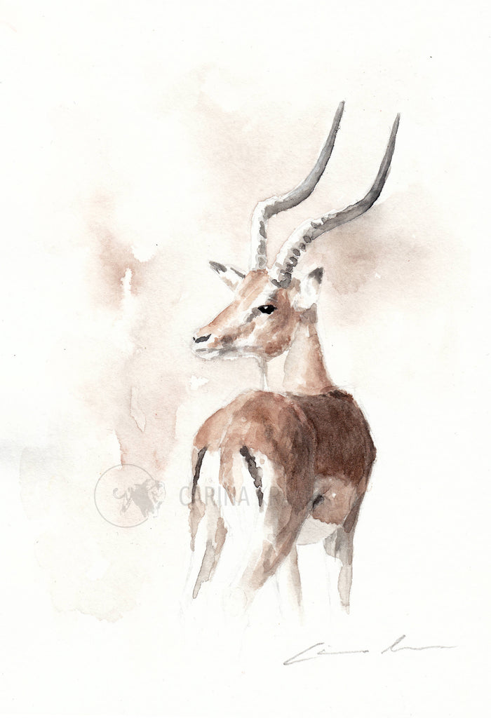 Impala - Sketch for Wildlife - Carina Kramer - Fine Art, Original Painting, Wildlife Art/ Animal Painting