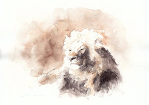Male Lion - Sketch for Wildlife - Carina Kramer - Fine Art, Original Painting, Wildlife Art/ Animal Painting