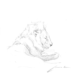 Lion Lines - Fine Art Print - Carina Kramer - Fine Art, Fine Art Print, Wildlife Art/ Animal Painting