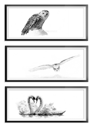 White Bird Collection - Carina Kramer - Fine Art, Theme Collection, Wildlife Art/ Animal Painting