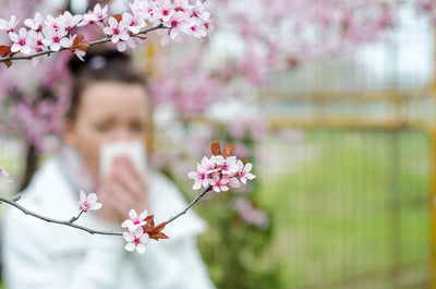 Stop the Sneezing! Air Purifiers for Allergies