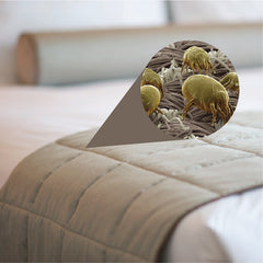 Dust Mites Found in Bedding and Mattress