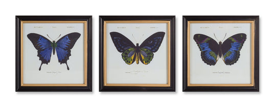 "Framed Butterfly Print (Set of 3) 12.75"" MDF"