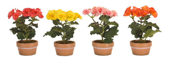 "Potted Begonia (Set of 4) 8""H Polyester/Ceramic"