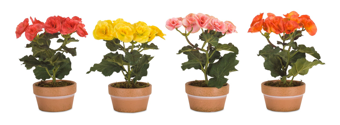 Potted Begonia (Set of 4) 8