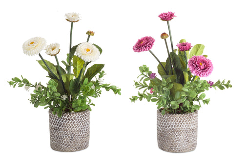 Potted Mum (Set of 2) 14