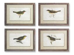 Framed Bird Print (Set of 4) 23.5