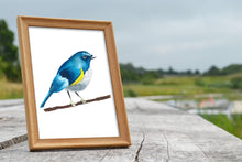 Load image into Gallery viewer, Himalayan Bluetail Watercolor Print