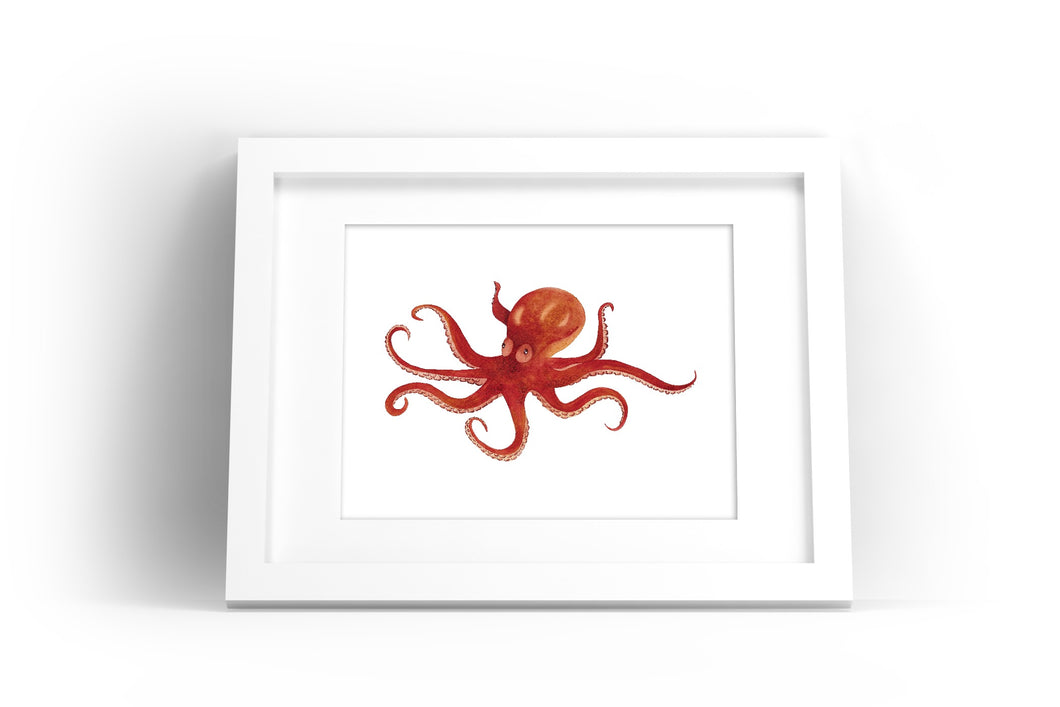 Octopus Watercolor Print