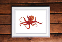 Load image into Gallery viewer, Octopus Watercolor Print