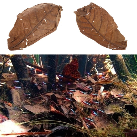 Natural Catappa Leaves for aquariums - 50pcs