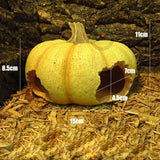 Pumpkin & Walnut Shell Shape Hideaways for Reptiles, Lizards & Insects